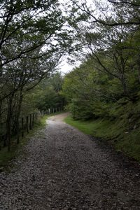 Camino way Pyrenees forest