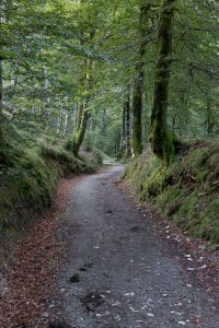 Forest path near Roncesvalles